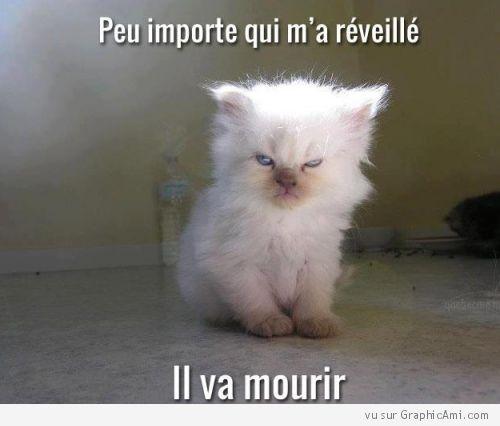 Un chaton énervé après un réveil difficile : Peu importe qui ma réveillé... Il va mourir ! :-)