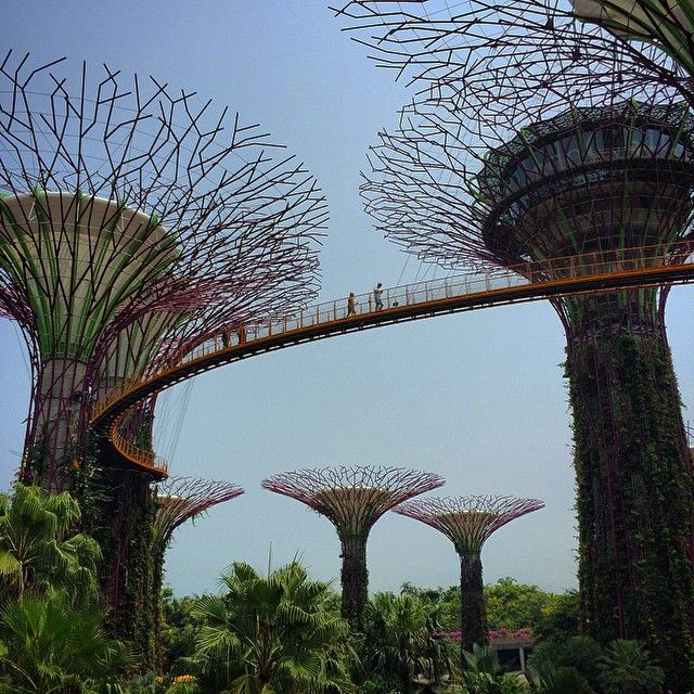 I 2012 åpnet Singapore sin nye storslåtte hage, Gardens by the Bay! Her kan man bl.a. gå inn i kunstig regnskog, spise på en av de mange restaurantene, spasere langs vannet og nyte utsikten over Singapors havn, eller vandre blandt, og i toppen av, supertrærne (se bildet, ekte Avatar feeling!).  #gardensbythebay #singapore #marinabay #travel #explore #asia #kilroy