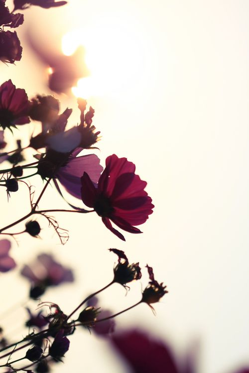 Sunflare floral
