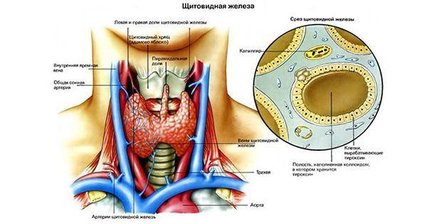 Каша для щитовидки