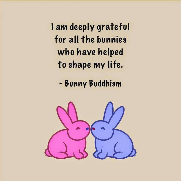 Bunny Buddhism ♡