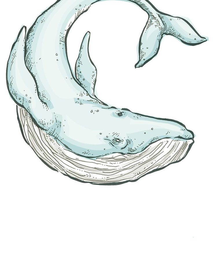 Best 25 Whale Illustration Ideas On Pinterest