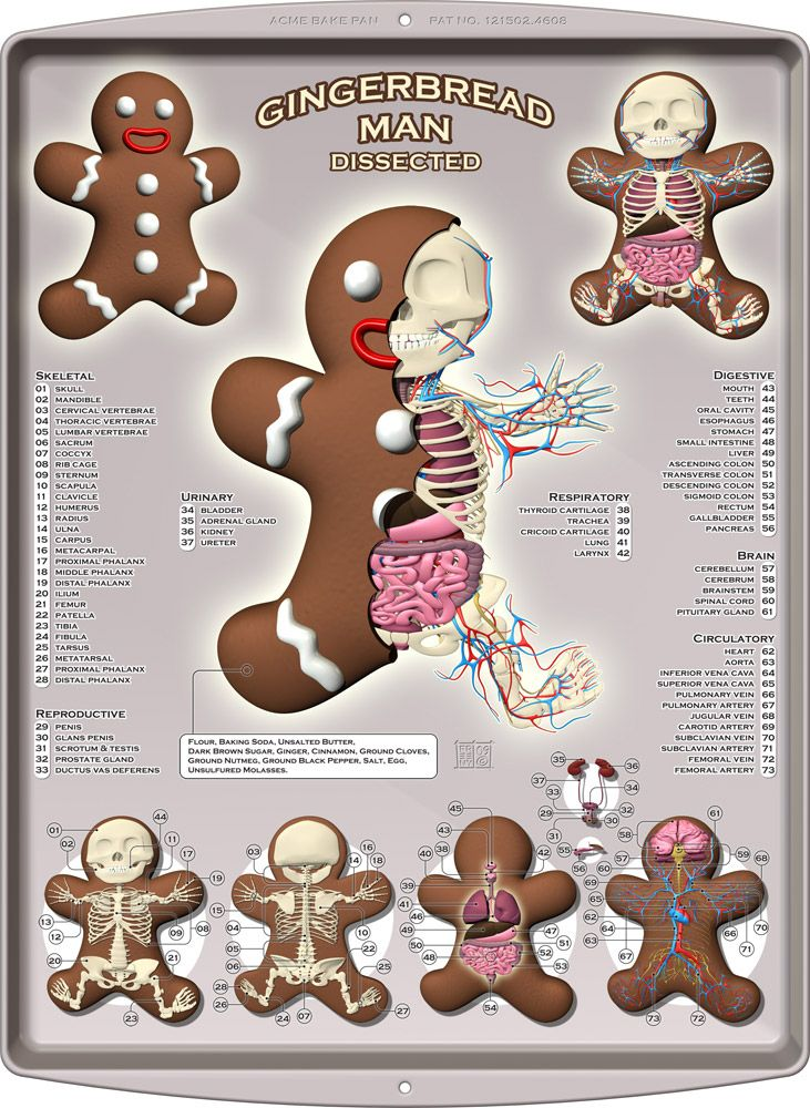 Gingerbread Man Dissected by Jason Freeny. Learning about anatomy/figure drawing. Pick your favorite cartoon/character and draw what his skeleton would look like.