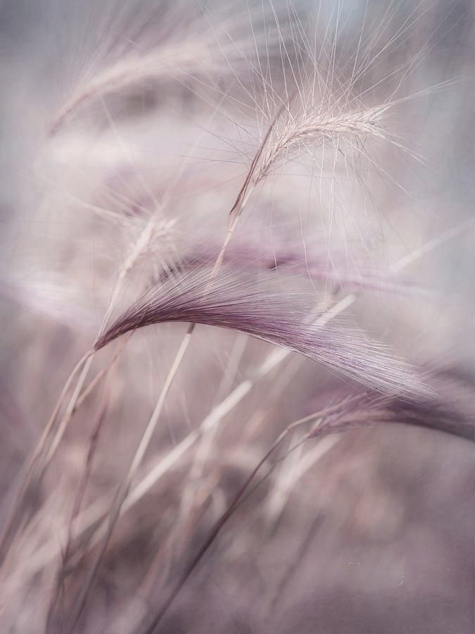 Whispers of the wind                                                                                                                                                                                 More