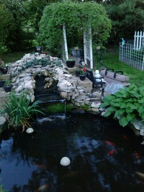 17 best images about koy ponds on pinterest lush for Koi pool water gardens blackpool