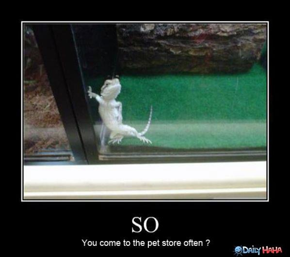 hahaPick Up Line, Beards Dragons, Funny Pictures, Funny Stuff, Pets Stores, So Funny, Lizards, Geckos, Animal
