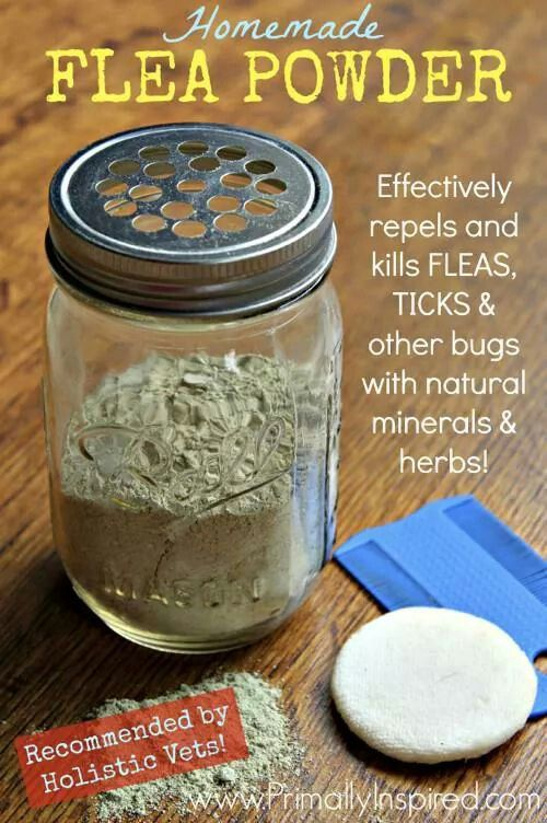 Homemade Flea Powder Recipe:    Ingredients:  1 cupFood GradeDiatomaceous Earth(findHERE)1/2 cupNeem Powder(findHERE)1/2 cupYarrow Powder(findHERE)20 DropsEucalyptus Essential Oil* Leave out the essential oil if using for cats.    Directions:  Mix all ingredients together and put in a shaker top container. I used a mason jar with a shaker top lid. Apply from head to tail along your pets spine in dry conditions.