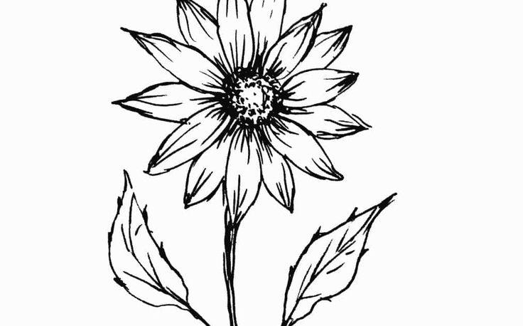 Paling Populer 13 Gambar Sketsa Bunga Tulip Mulailah Dengan Menggambar Bentuk Lingkaran Kecil Lukisan Sketsa Bu Sketsa Bunga Perlengkapan Seni Lukisan Bunga