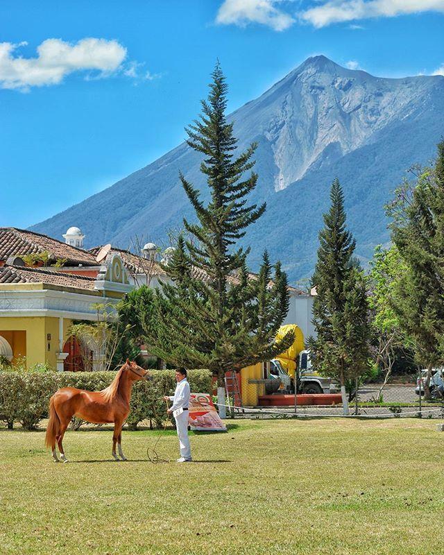Impresionante! Competencia Centroamericana de Caballos Peruanos  #caballo #guatemala #antigua #volcan #instaguate #peruano #horse #fuego