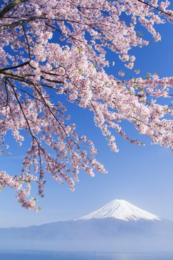 Les 25 meilleures id es de la cat gorie arbre japonais sur for Cerisier nain garden bing