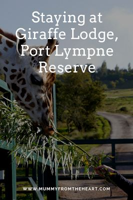 8 Top Tips for Enjoying your Stay at Giraffe Lodge, Port Lympne Reserve, Kent.  Wake up to the beautiful Romney Marshes and the animals roaming free. It is an amazing venue for a romantic night away for any couple.