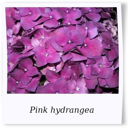 Hortensia in pink!!