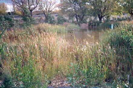MP 7896. Glen Iris Park Wetlands. The Glen Iris Park Wetlands were established along Gardiners Creek as part of the redevelopment following construction of the South Eastern Arterial Road; 1988.