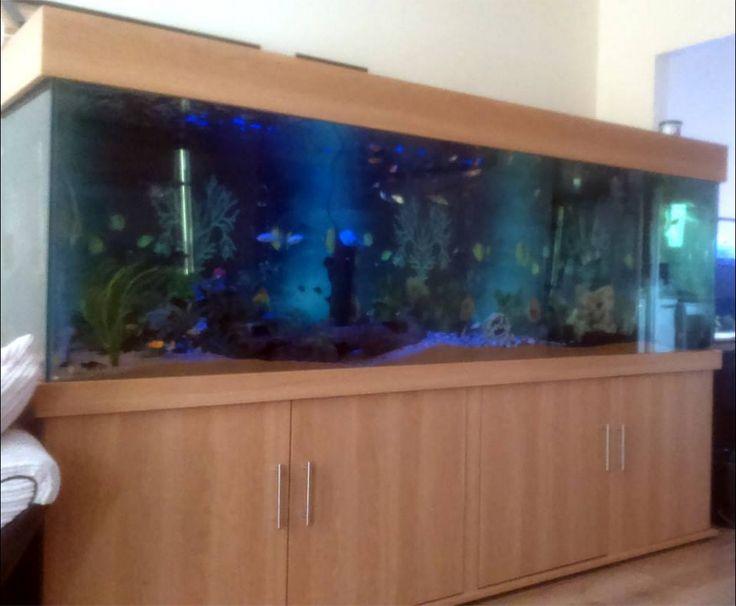 Best 25 Tropical Aquarium Ideas On Pinterest