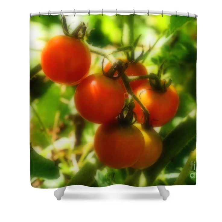 Cherry Tomatoes On The Vine Shower Curtain For Sale By 400 x 300