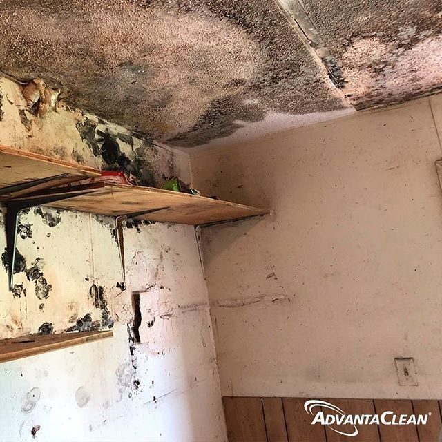 Its Important To Look For Signs Of Mold In Home Because Mold