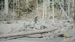 Paranormal-Series: Is Bigfoot From Another Dimension