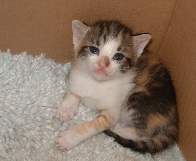 Click here to see the world's most adorable little newborn kittens!