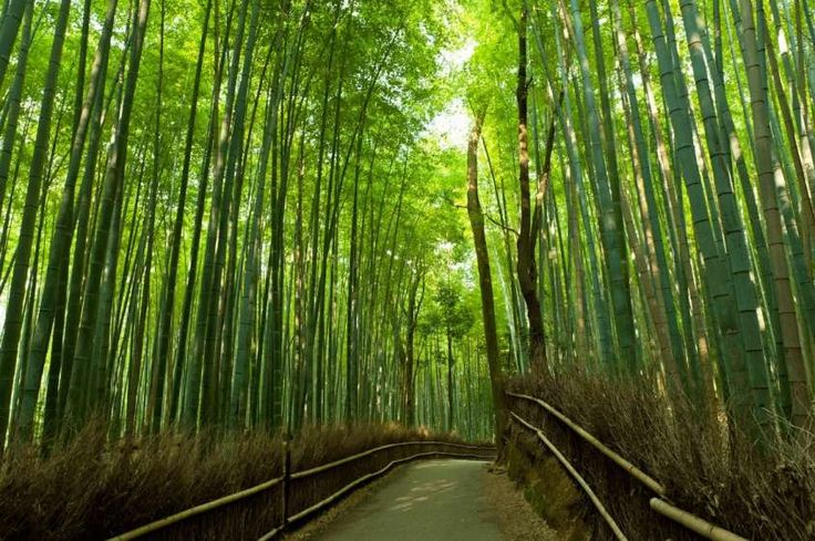 Luoghi surreali nel mondo - Foresta di bambù Arashiyama, Kyoto Giappone