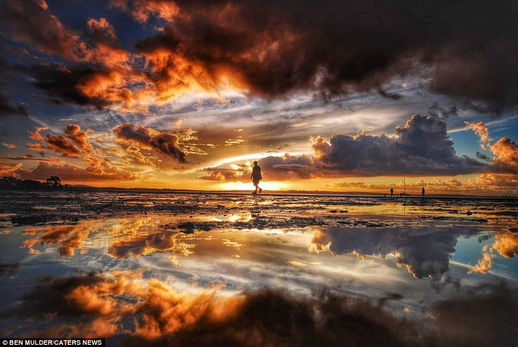 This electric image shows a ma walking along the mud on the beach surrounded by a flurry o...