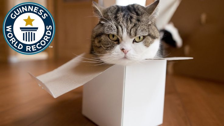 Guinness World Record For Most Watched Cat on YouTube Goes To Maru From Japan