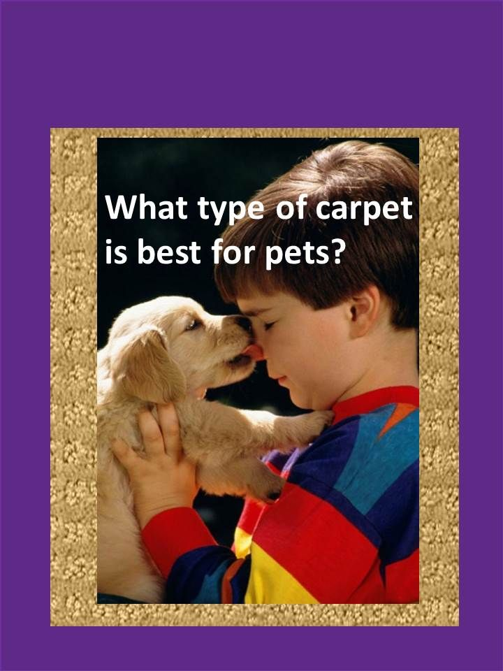 When it comes to pets, what's the best type of carpet? Introducing Stainmaster PetProtect carpet. Resists pet stains, odor and vacuums dog & cat fur easily.