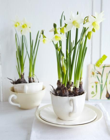 decorating with narcissus