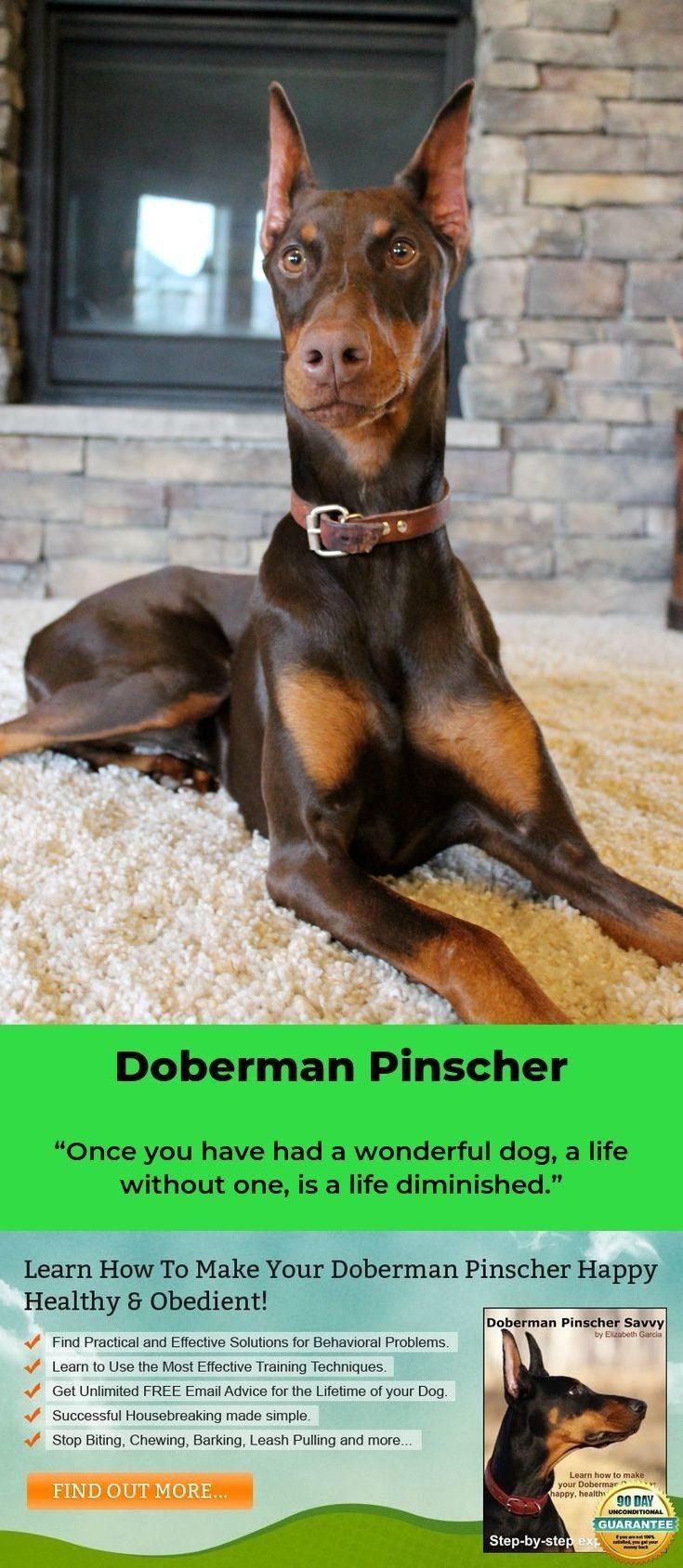 Roberthuddlestone Doberman Pinscher Doberman Mix Doberman