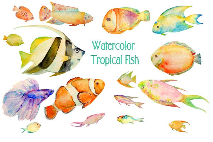Watercolour fish clipart digital download carp, trout, tuna, sardine, pike, sea fish for fishing themed cards, invitation, bathroom decor by CornerCroft on Etsy