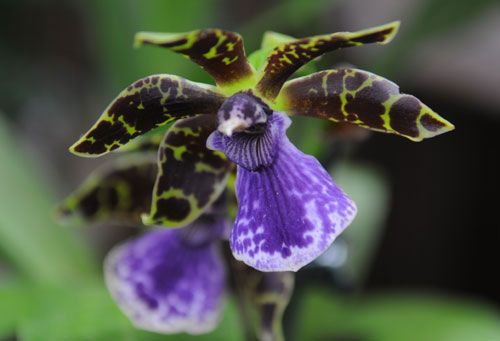 How to Grow OrchidsOrchids Care, Flowers Plants Tre, Amazing Orchids, Fav Flower, Flowers Gardens Landscapes, Colors Orchids, Growing Orchids, Gardens Indoor, Flowers Plants Gardens