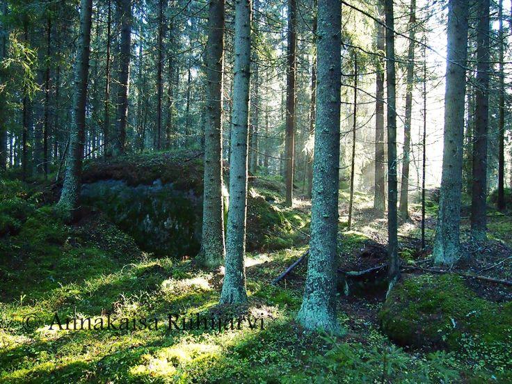 Syksyinen metsä.