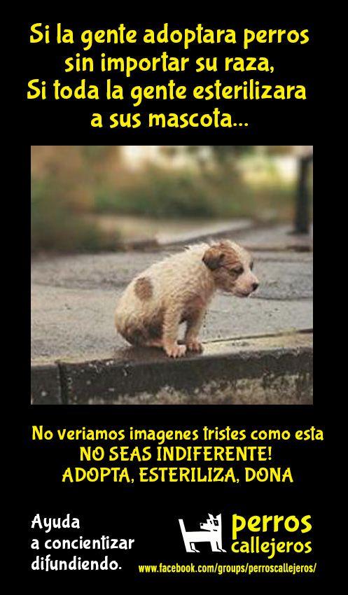 Ayuda a angeles de cuatro patas! Ellos merecen ayuda a cambio de cariño y lealtad!!!!!!