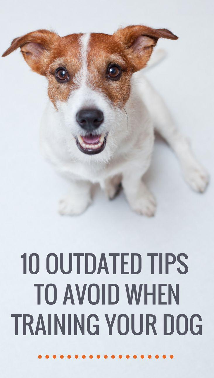 10 Dog Training Tips I M Tired Of Hearing Dog Training Tips Dog