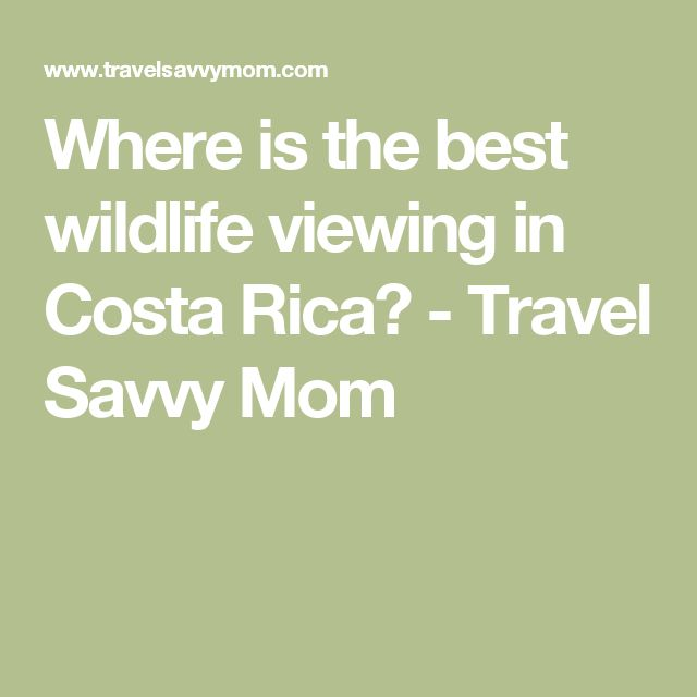 Where is the best wildlife viewing in Costa Rica? - Travel Savvy Mom