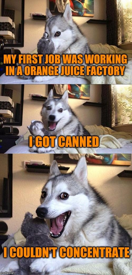 Bad Pun Dog   MY FIRST JOB WAS WORKING IN A ORANGE JUICE FACTORY I GOT CANNED I COULDN'T CONCENTRATE   image tagged in memes,bad pun dog   made w/ Imgflip meme maker