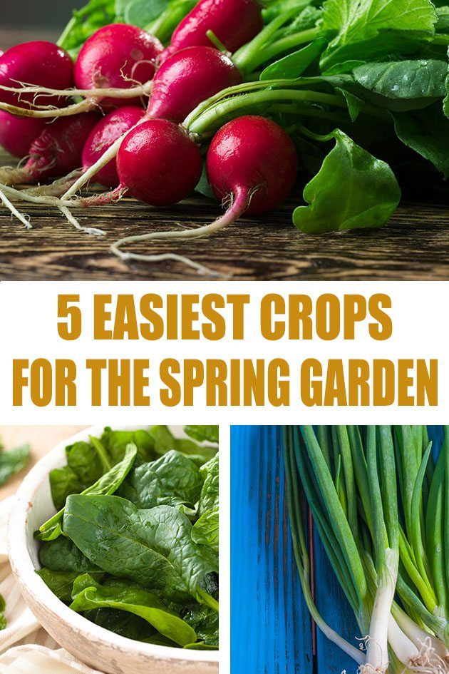 5 Easiest Cold Weather Crops To Grow In The Home Garden Easy
