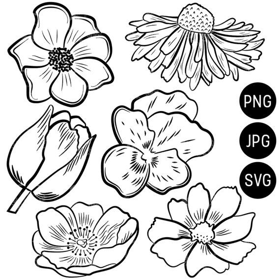 Spring Flowers Clipart, Flower Designs, Flower Silhouette SVG cut files, Cricut SVG, Daisy Clipart, Floral Line Art Illustration  This listing is for a clipart set of 6 digitally hand drawn flower design elements. Can be used digitally or in print. Perfect for invitation design, scrapbooking, cardmaking, stickers, announcement cards, blogs, digital stamps, greeting cards, web design, decorations or anything! ≈≈≈≈≈≈≈≈≈≈≈≈≈≈≈ WHAT YOU GET: ≈≈≈≈≈≈≈≈≈≈≈≈≈≈≈  • 6 individual files in one zip file…