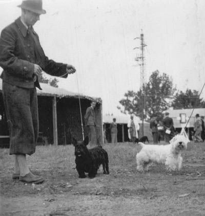 History of the Cesky Terrier  Mr Horak with Scottish and Sealyham Terriers