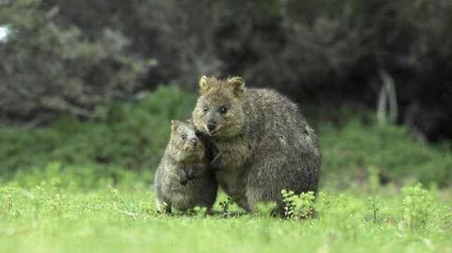 familias de animales