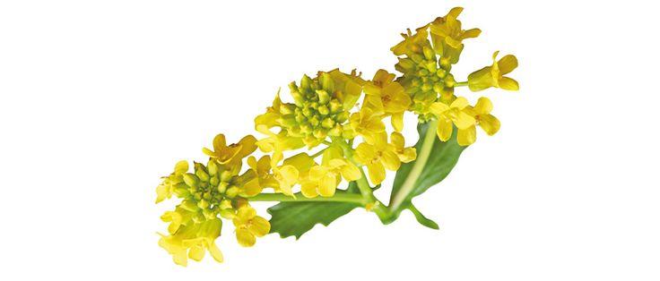 Profil trawy i chwasty to test alergiczny, który składa się 10 alergenów. Służy do diagnostyki z krwi alergii wziewnych. W jego skład wchodzi 10 najpopularniejszych w Polsce pyłków traw i chwastów.