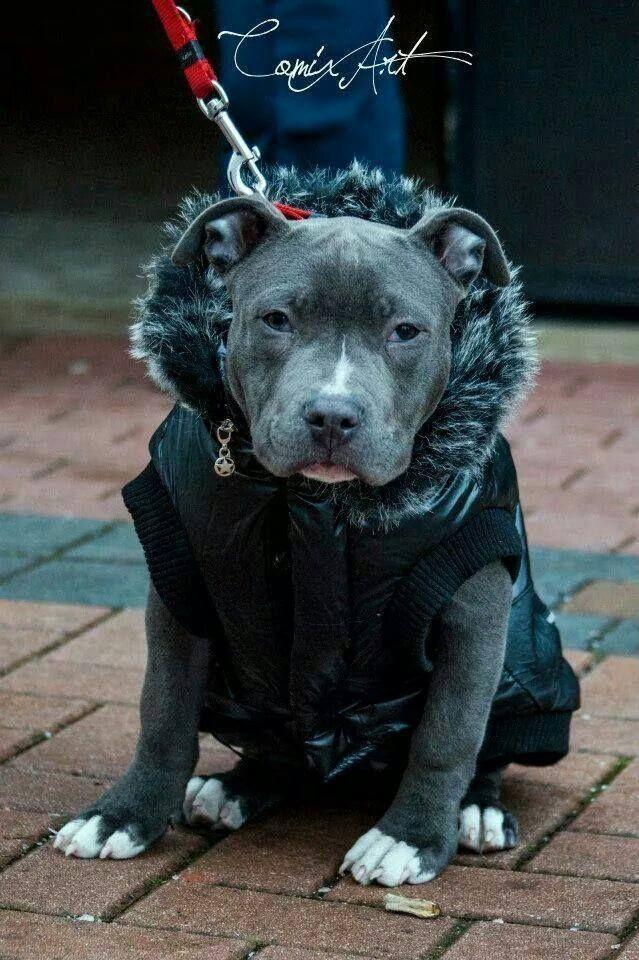 Pin by Rhian Townsend on Doggos | Nanny dog, Dogs, Pitbulls