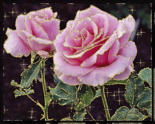 Holdvilágnál,Tengeren futó pár,Alvó nő,Autózó nő,Hóesésben,Bimbós rózsa,rózsa,Rózsa,Páros kép,ősszel, - gosztmagdi Blogja - Festmények ,Humor,Képek ,Receptek,Versek,Viccek,Video,Ünnepek,