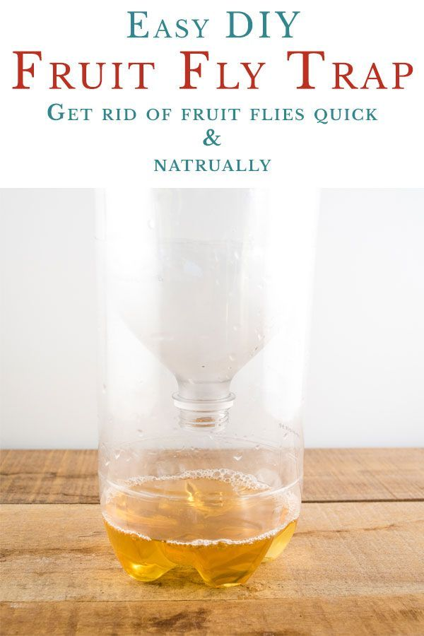 How To Make A Fruit Fly Trap Get Rid Of Flies Fast Fruit Fly