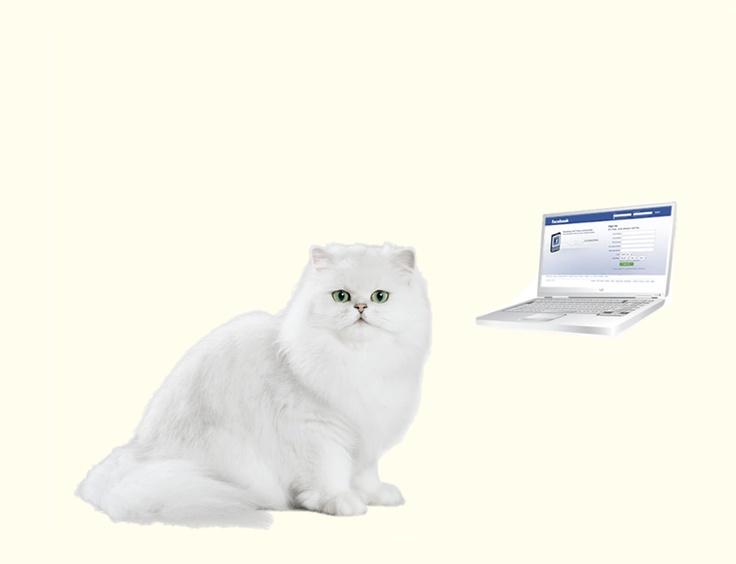 """Ca initiatoare a proiectului """"Pisicile au cucerit Internetul"""" va invit sa faceti parte din cea mai mare comunitate pisiceasca."""
