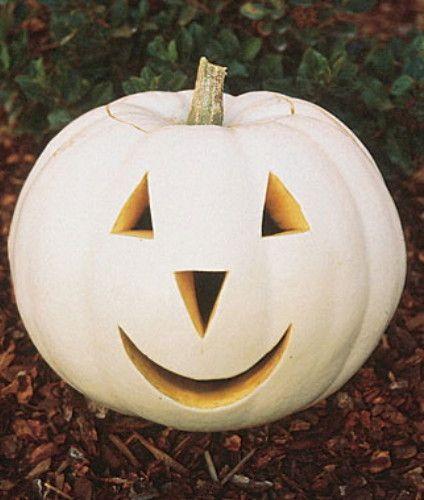 Ghostly White Pumpkin 10 Seeds- Lumina