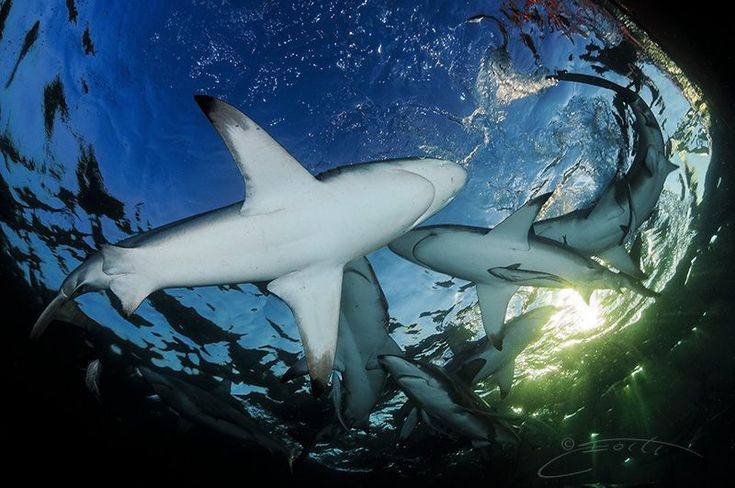 ~ Shark Pond ~  One of my Happy places! by Geo Cloete