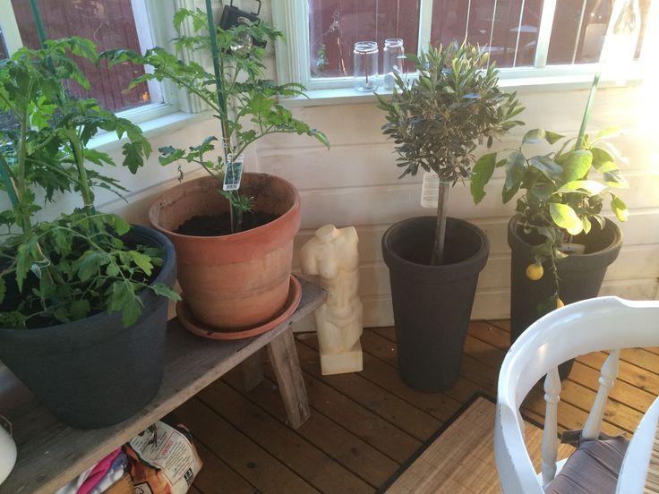 Lusthus plantering