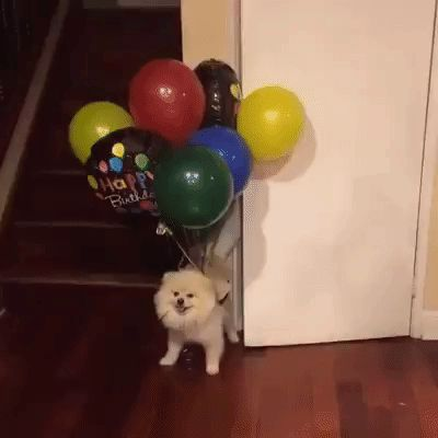 Find Your GIFs | Funny, Fail, Animals, Cats, Dogs, Cars, GIF, Random GIFs, Giphy, Best GIFs and much more..