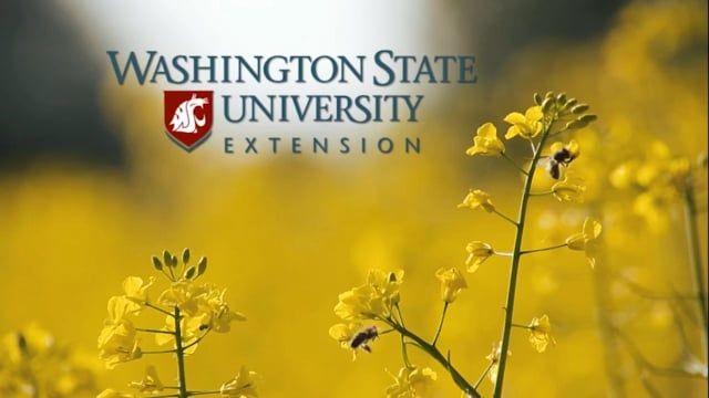 Pollination and Protecting Pollinators