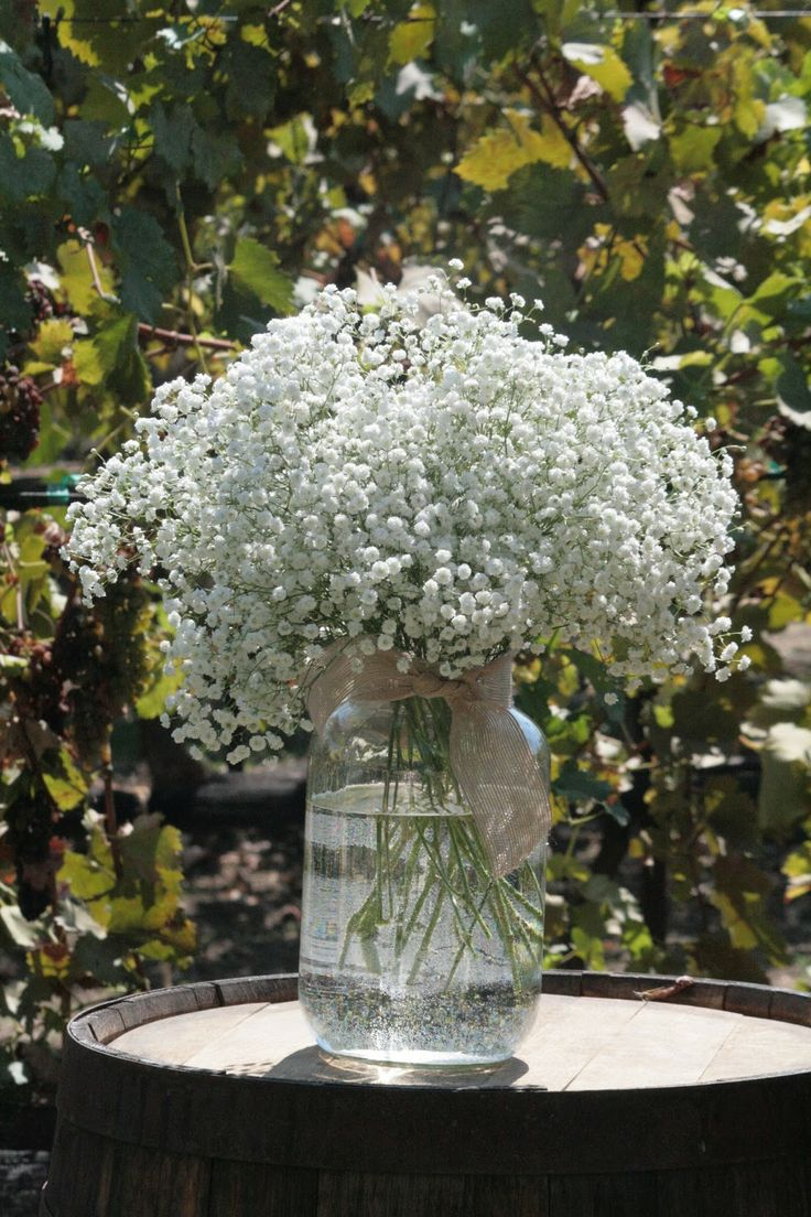 1000 Images About Baby S Breath Gypsophila On Pinterest